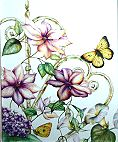 Clematis and Sulphur Butterflies