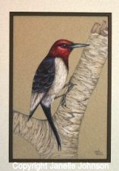 E-Tutorial Redheaded Woodpecker