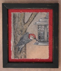 Red-bellied Woodpecker DVD