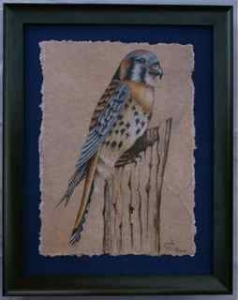 Kestrel Framed Painting